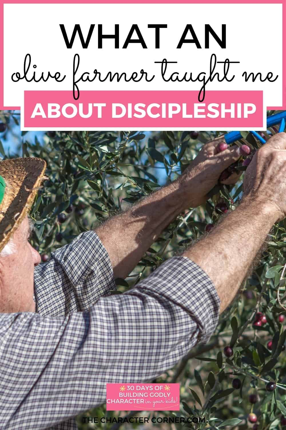 Olive Farm Pruning Tree text on image reads: What an Olive Farmer Taught Me About Discipleship